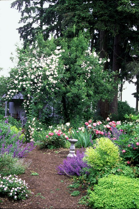 "Lovely garden ""rooms"" are an important part of your visit to Heirloom Roses, St. Paul, just 17 minutes from Aurora."